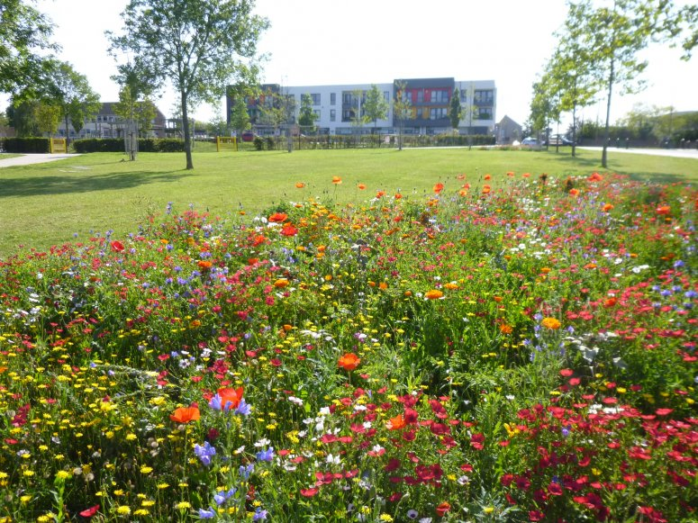 Gainsborough Square wild flowers - credit to Max McClure, Bristol City Council