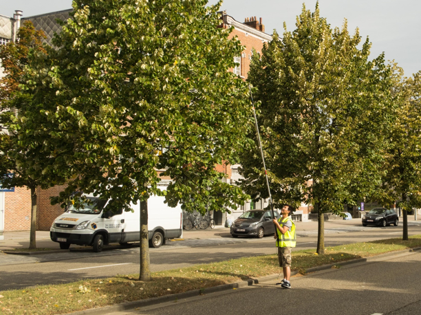 Urban trees in Leuven