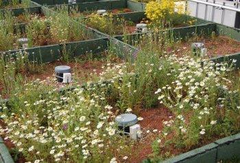 Green roof design, Barking Riverside