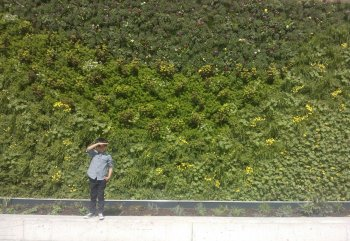 Green wall at Birmingham New Street Station - credit to Qsustain