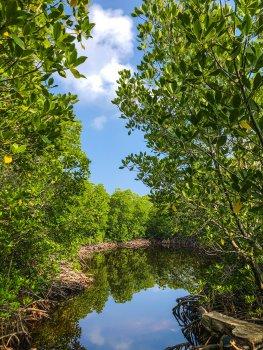 Community-based mangrove forest restoration
