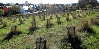 Reforestation of unused areas in the municipality of Lorient
