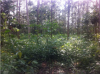 Two plots in an 'analogue forest' - Photo credit: Liette Vasseur